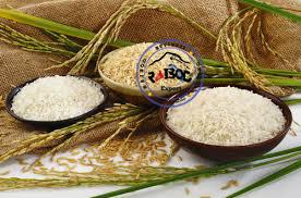 صادرات برنج هاشمی