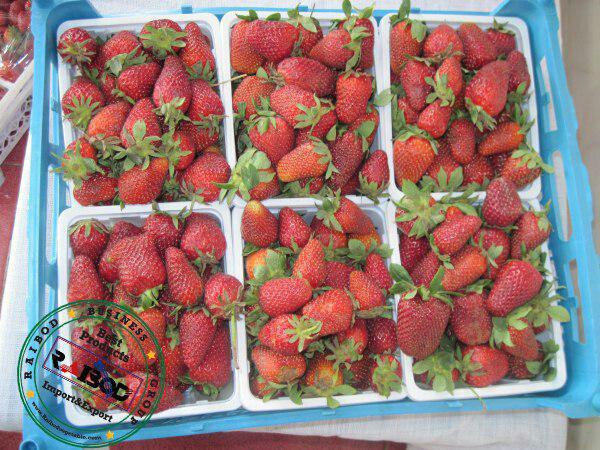 صادرات توت فرنگی