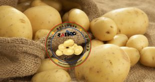 صادرات سیب زمینی اردبیل به ارمنستان