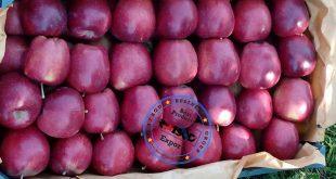 صادرات سیب قرمز لوکس