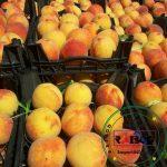صادرات میوه هلو