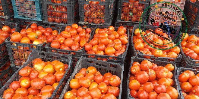 صادرات گوجه فرنگی باکیفیت