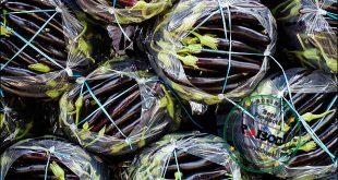صادرات بادمجان درجه یک