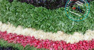 صادرات سبزی