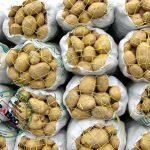 فروش و صادرات سیب زمینی