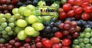 صادرات انگور شانی