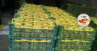 صادرات کیوی سورت شده
