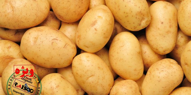 صادرات سیب زمینی آستارا