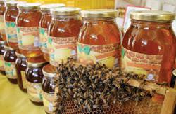 صادرات عسل