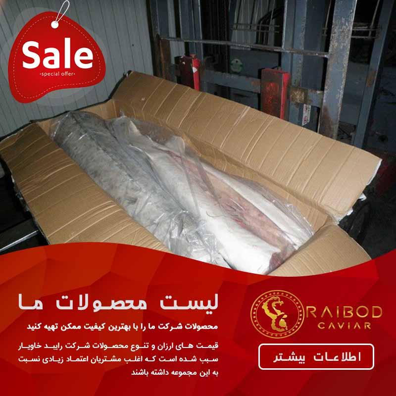 صادرات گوشت فیل ماهی یا بلوگا