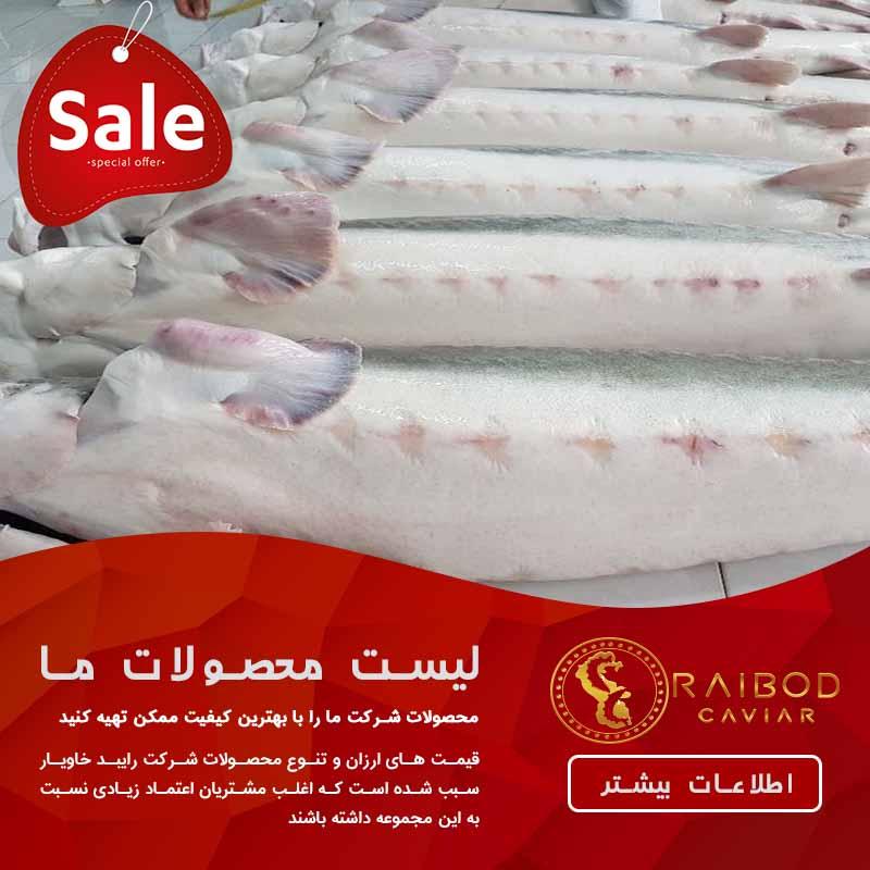 خرید ماهی بلوگا