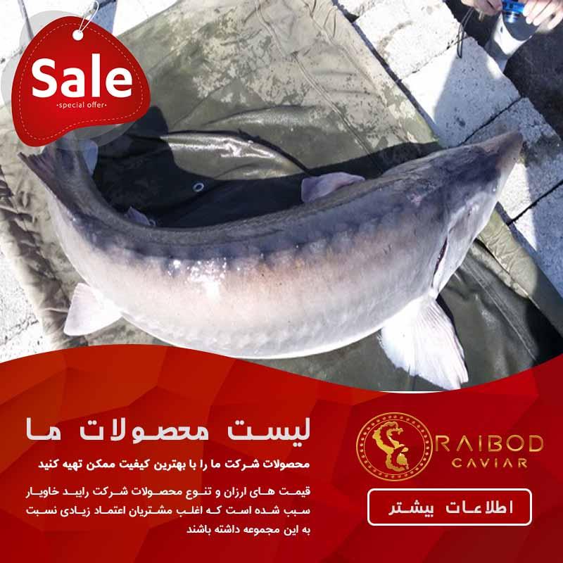 فروشنده ماهی خاویار