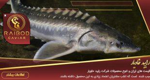خرید آنلاین ماهی خاویار روسی
