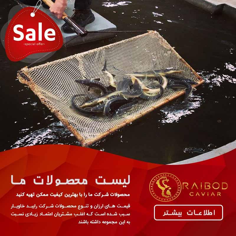 تولید گوشت خاویاری در ایران
